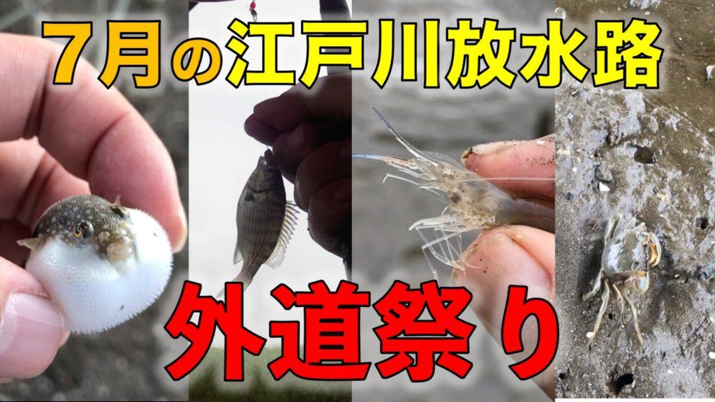 江戸川放水路のハゼ釣りで外道で釣れる魚・生き物